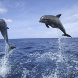Delfini e balene dal drone  Lo spettacolo della natura