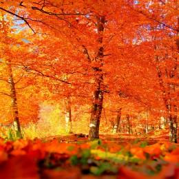Foliage, l'autunno che dipinge  tutti gli alberi del mondo