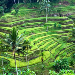 Ubud, la Bali dello spirito