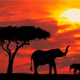Nami, Botswa, Zimba  Ecco il mal d'Africa