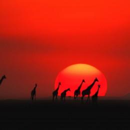 Kenya, tutta l'Africa che vuoi:  cena nella savana e ghepardi