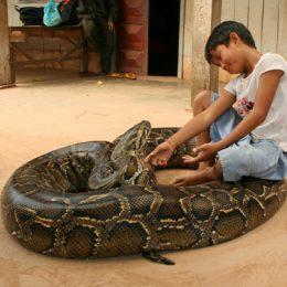I bambini a caccia di serpenti,  scene di vita cambogiana